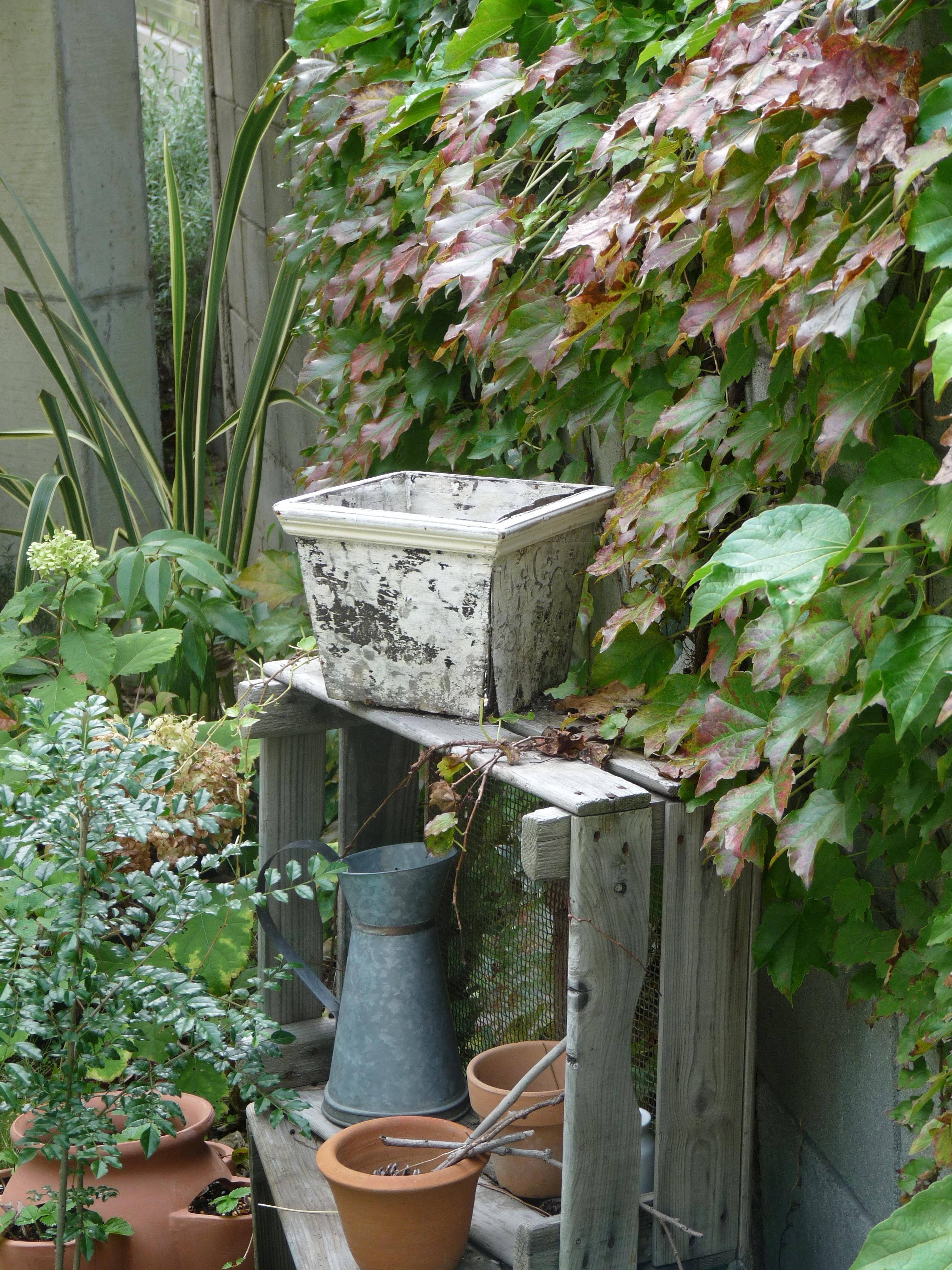 わが庭の秋 画像.JPG